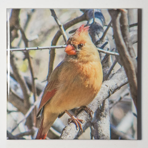 Ceramic Coaster or Trivet - Northern Cardinal - female
