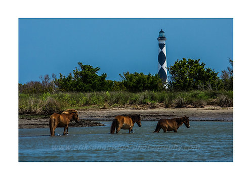 Wild Horses and Cape Lookout Light House, Cards and Prints