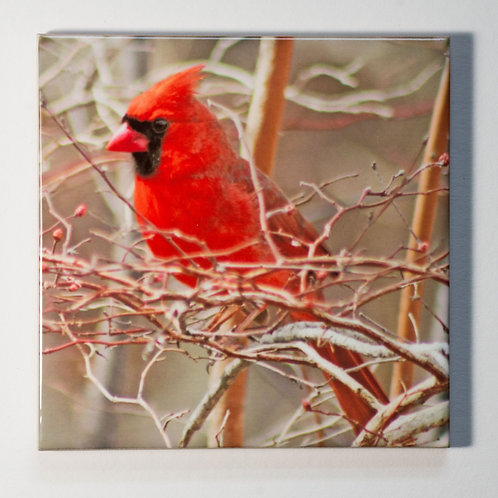 Ceramic Coaster or Trivet - Northern Cardinal - male #3