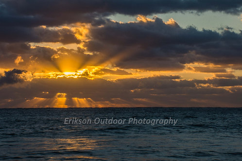 Sun's Rays, Singer Island, Cards and Prints