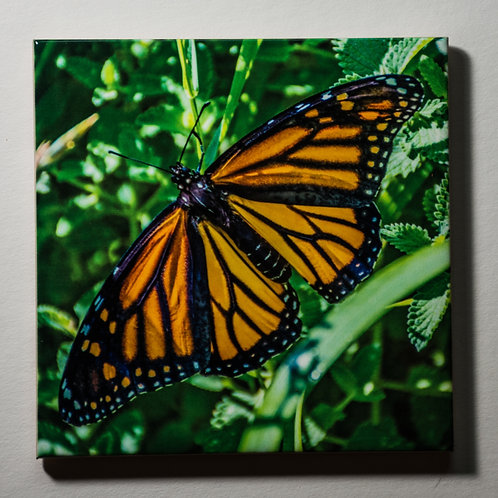 Ceramic Coaster or Trivet - Monarch