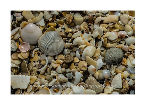 Singer Island Shells #2, Cards and Prints
