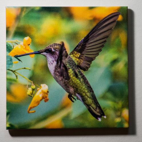 Ceramic Coaster or Trivet - Ruby Throated Hummingbird - female