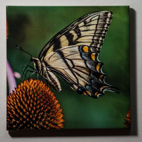 Ceramic Coaster or Trivet - Eastern Tiger Swallowtail - profile