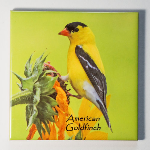 Ceramic Coaster or Trivet - American Goldfinch - male