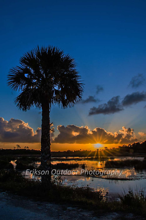 Palm Tree at Sunset, Cards and Prints