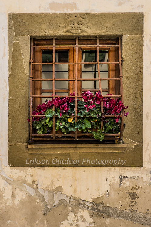 Window & Flowers #1, Florence, Italy, Cards and Prints