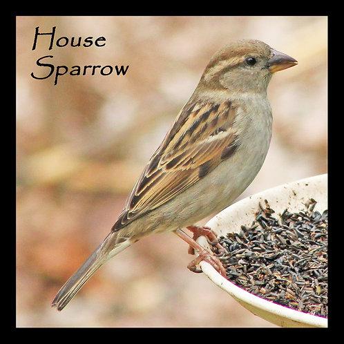 Wooden Coaster - House Sparrow