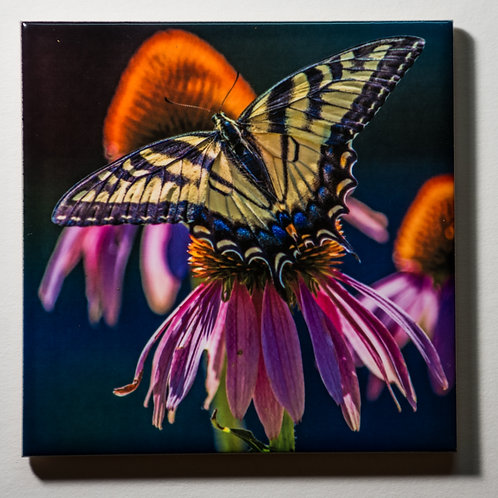 Ceramic Coaster or Trivet - Eastern Tiger Swallowtail on Purple Cone Flower #2