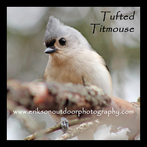 Wooden Coaster - Tufted Titmouse