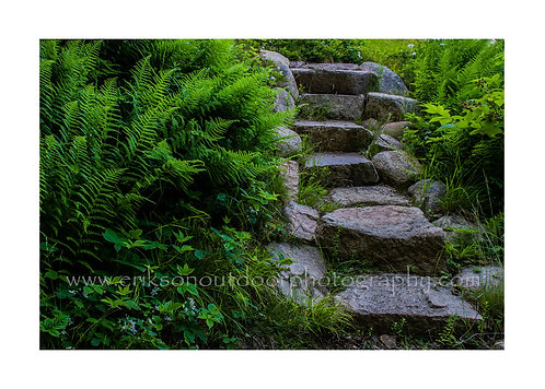 Stone Steps, Mount Dessert Island, Maine, Cards and Prints