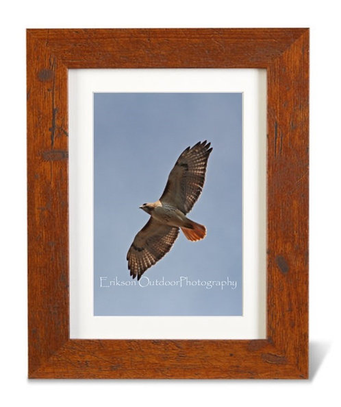 4x6 print with 5x7 matte and frame / Red Tailed Hawk