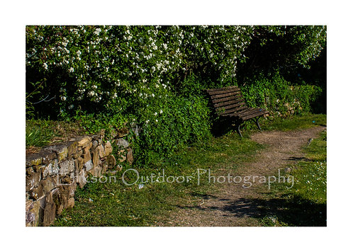 Bench in the Rose Garden, Florence, Italy, Cards and Prints