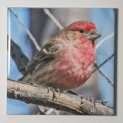 Ceramic Coaster or Trivet - House Finch - male