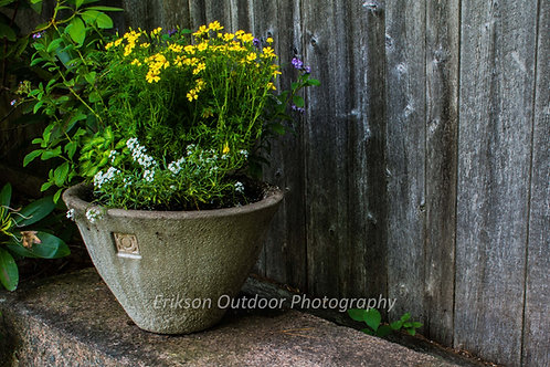 Planter with Yellow & White Flowers, Cards and Prints