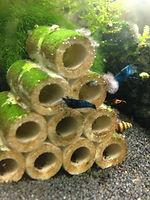 Miniaquarium, Nano Aquarium