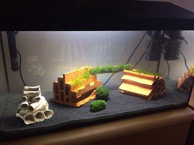 Mini-Aquarium mit Lufthebefilter
