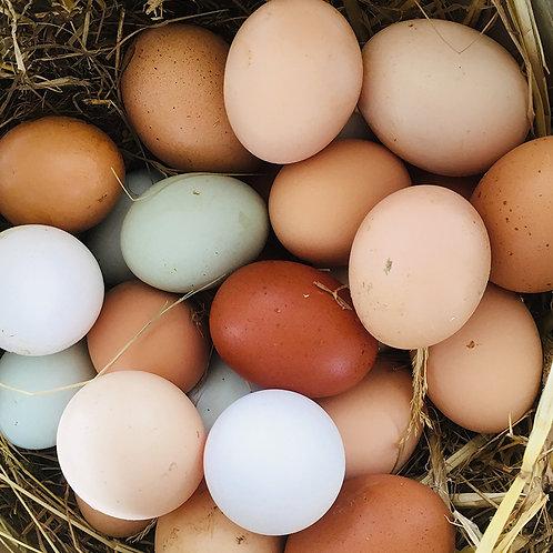 Pretty chicken eggs