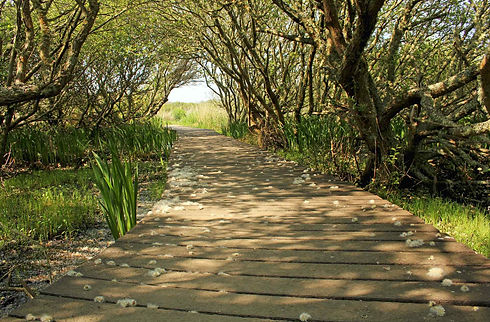 Lower Moors Nature Trail - Boardwalk  © BareFoot Photographer.jpeg