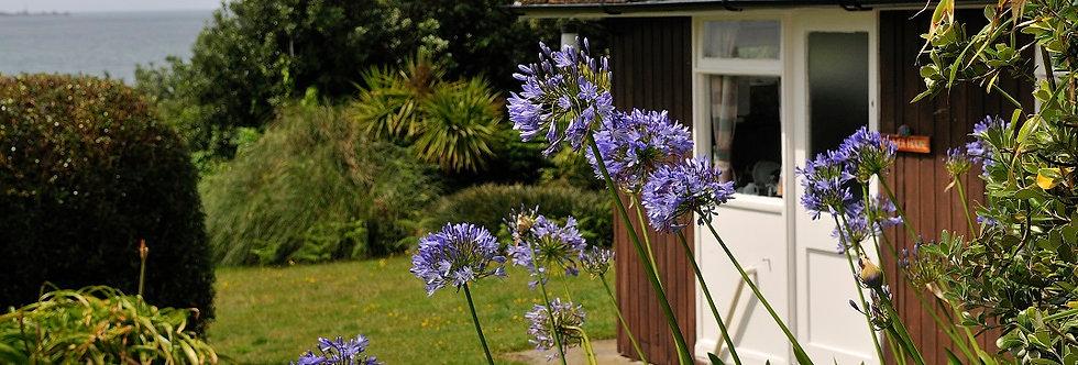 Mixed Agapanthus Bulbs (White & Blue)
