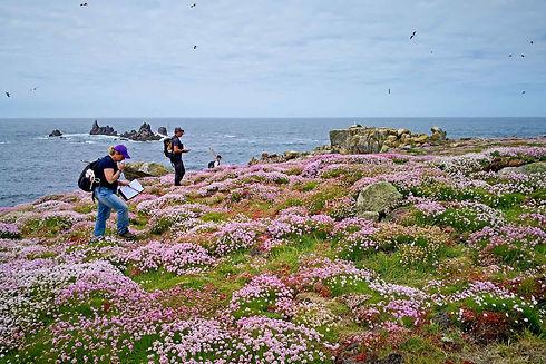 Annet Gull Surveys, Isles of Scilly - 2019 © BareFoot Photographer & IoS WT.jpeg