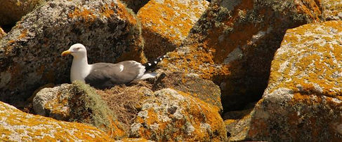 Wildlife Isles of Scilly