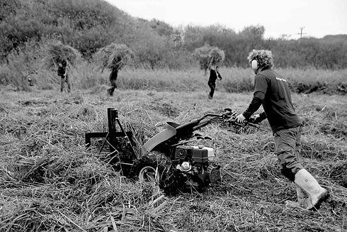Rangers Reed Cutting on Lower Moors © Barefoot Photographer.jpeg