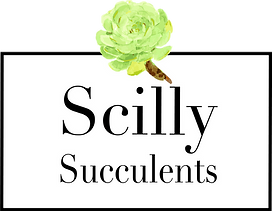 Plants Succulents from Isles of Scily