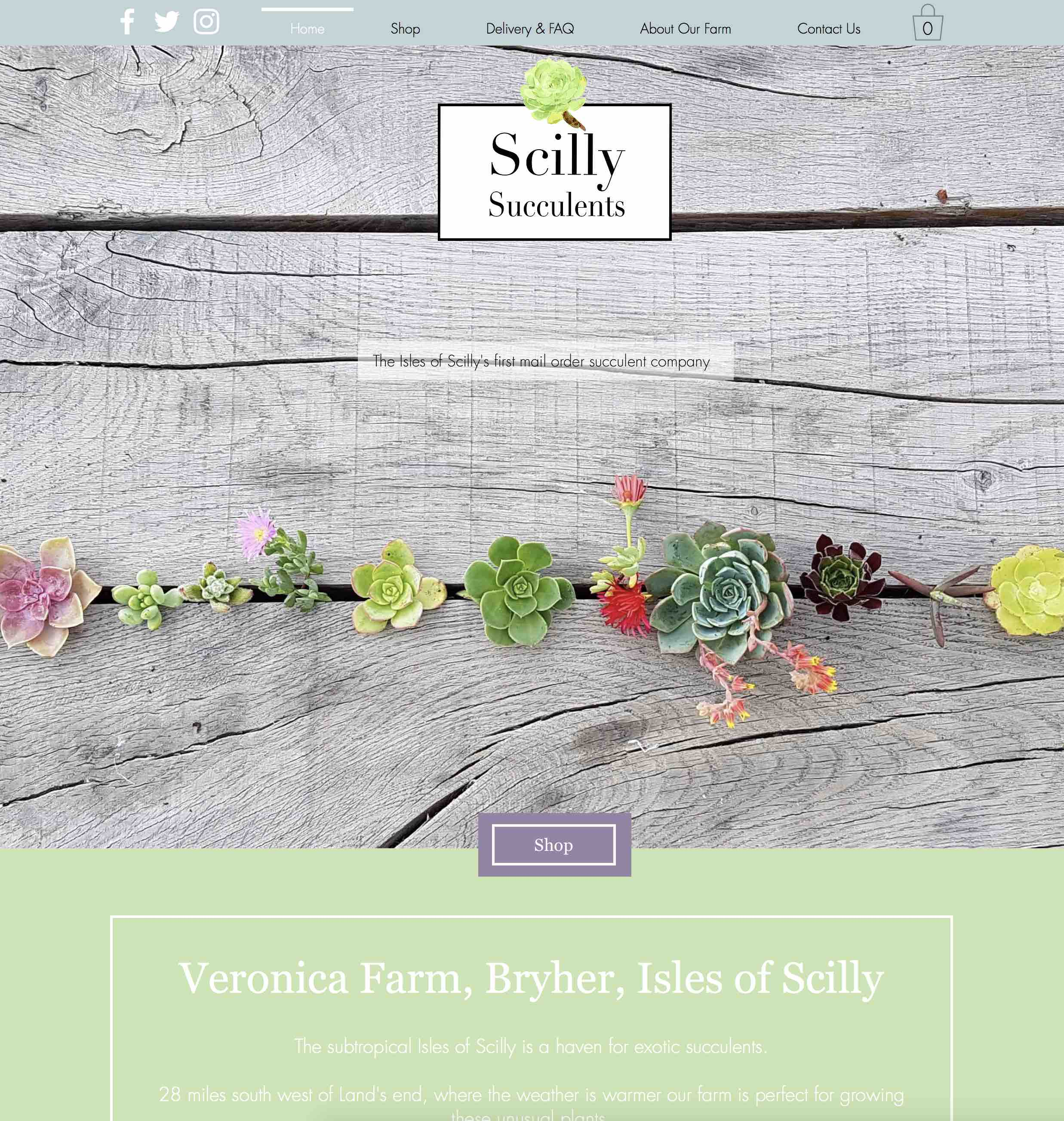 Scilly Succulents