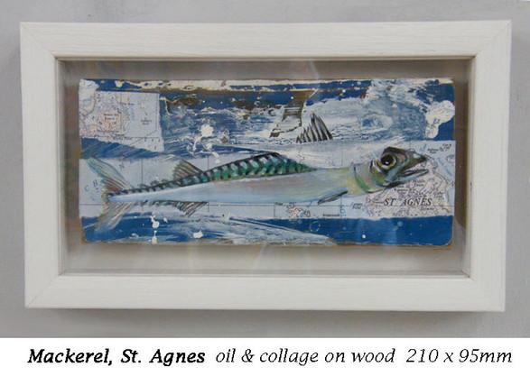 Mackerel, St Agnes