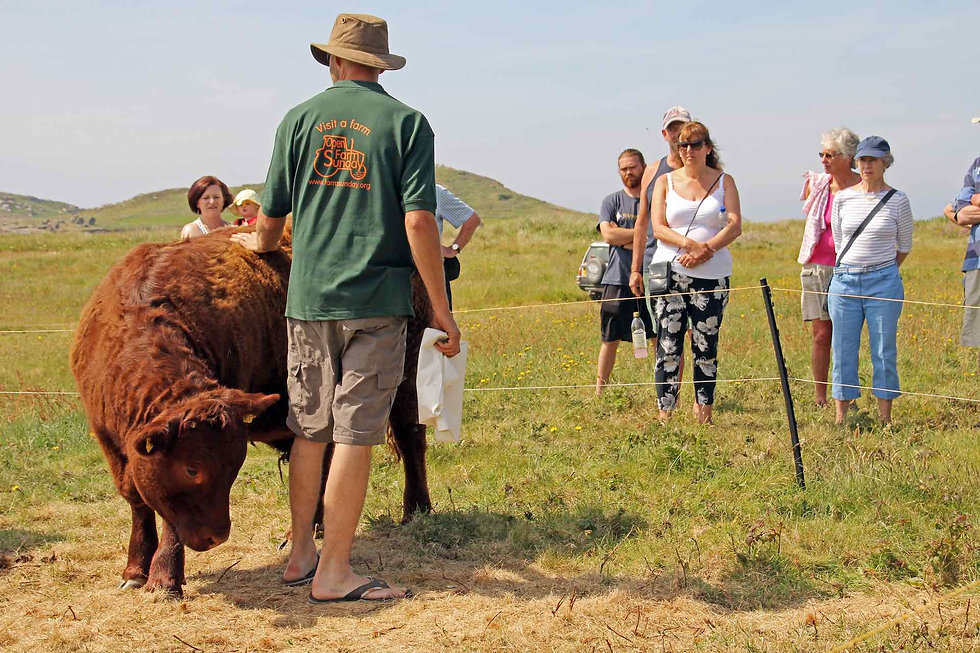 Open Farm Sunday at Hillside Farm © BareFoot Photographer.jpeg