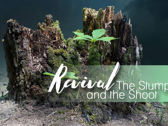 Revival:  The Stump and the Shoot