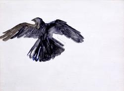 Trapped Crow no.2