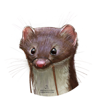 Close up Weasel
