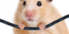 mouse and cable.jpg