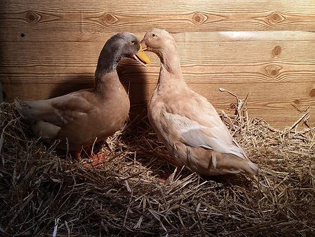 taking duck pics 056.jpg