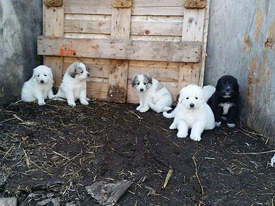 Sept 17 puppies 014.jpg