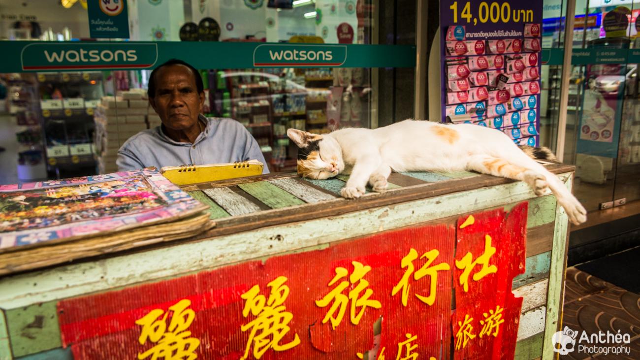 cat chat china town bangkok Thaïlande - Thailand -