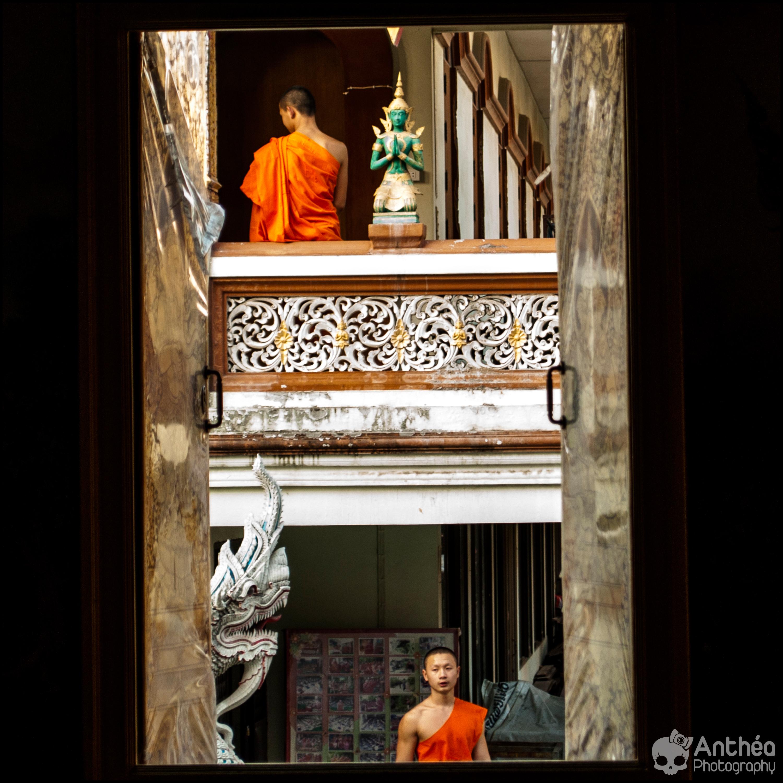 moines monkey thailand