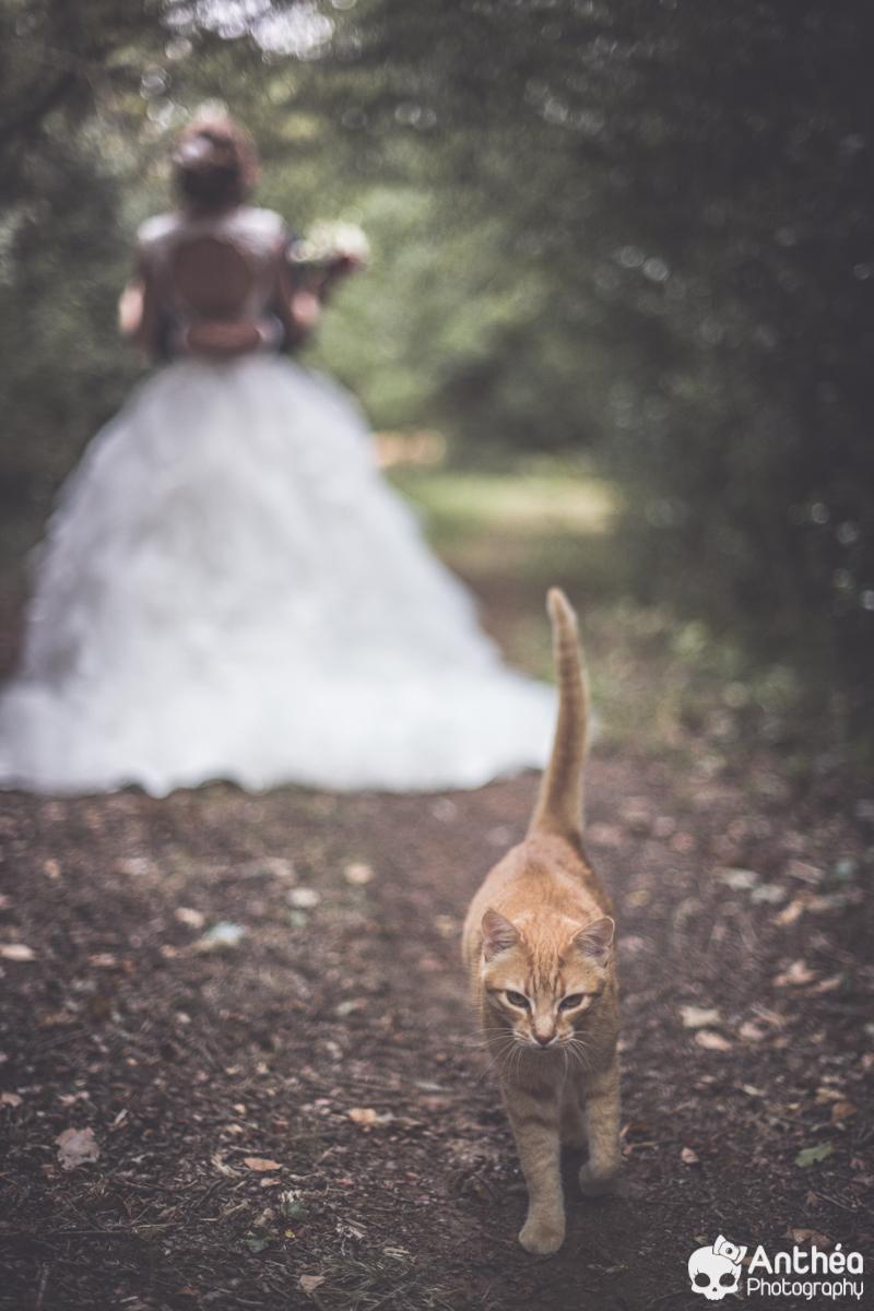 Mariage la Roche Sur Yon Chat