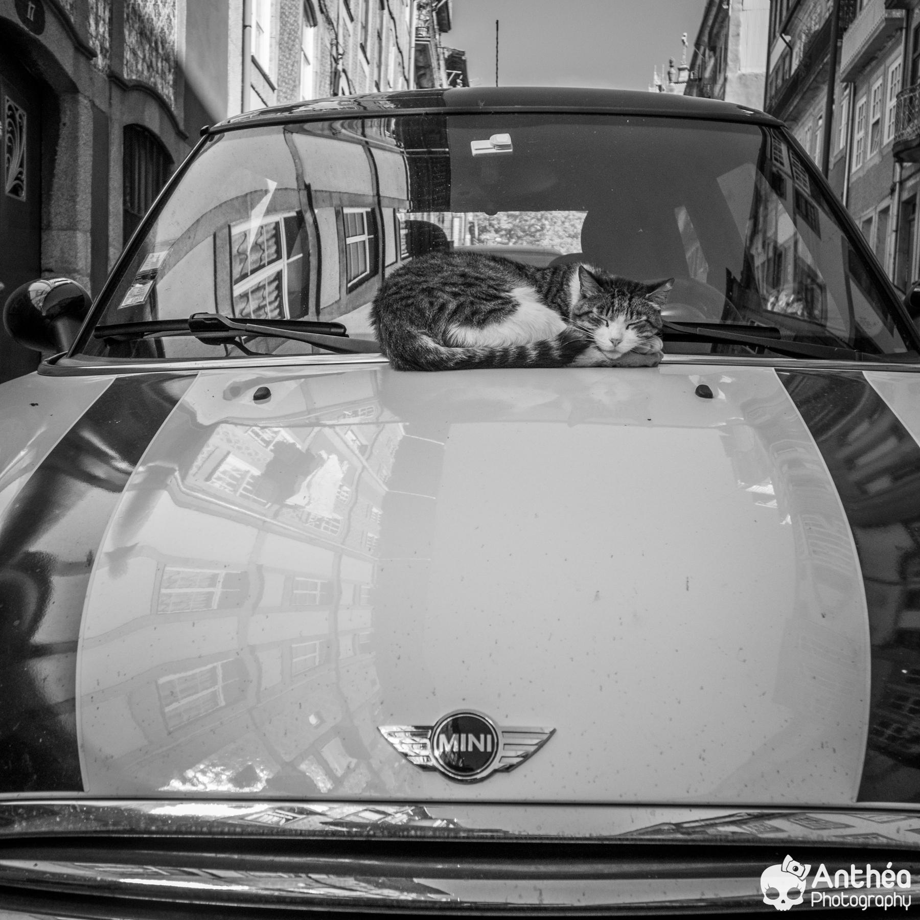 Cat Porto