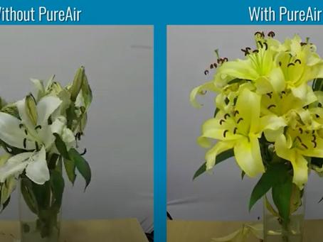 Test ventilátorů Airius: značné prodloužení životnosti květin