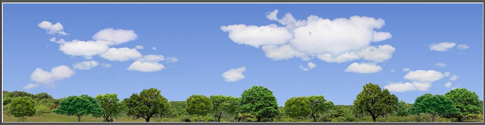 #471 trees and sky backdrop