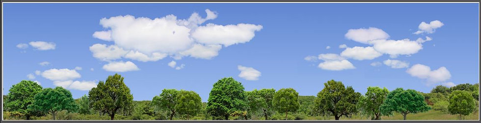#670 trees and sky backdrop