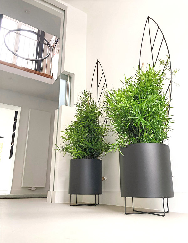 indoor plant, plant, outdoor garden, plant holder, green living, plant accessory, home decor, plant shop, robe, kimono, natural organic clothing, no chemical, botawall, bruxelles environment, ixelles