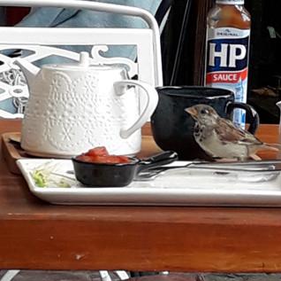 Résident du Stripe Café venu me saluer