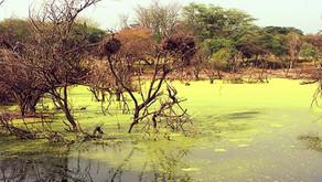 Sénégal à coeur ouvert - part 2
