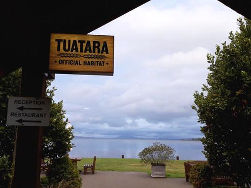Vue sur Taupo Lake en arrivant...