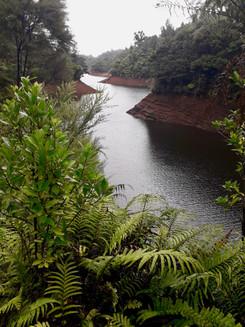 On the Waikatere Dam Walk. ©Taina CALISSI