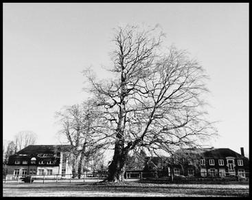 Et au milieu, un arbre...